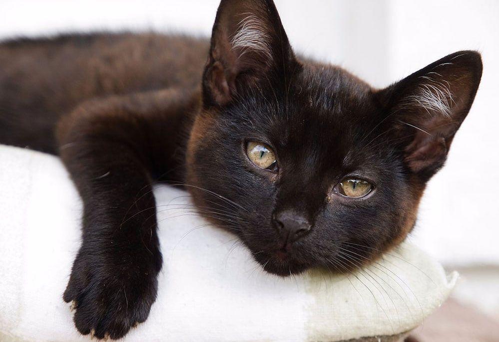 Black-Cat-Appreciation-Day.jpg
