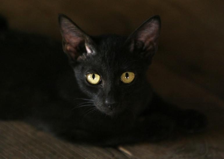 216644-beware-black-cats.jpg