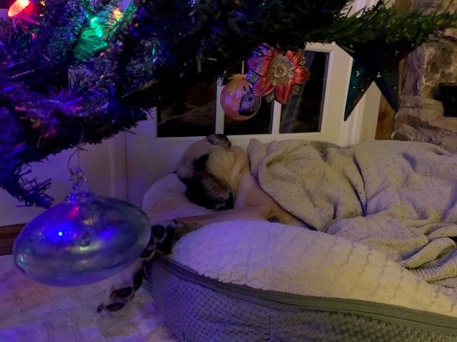 Ted Under Tree