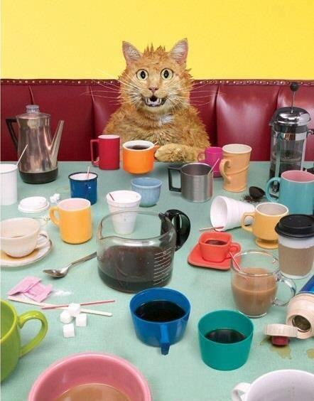 What? What? no such thing as too much coffee!