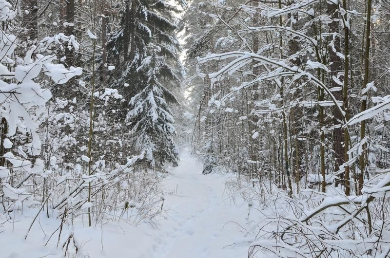 awesome-winter-landscape-snow-covered-path-trees-wild-forest-winter-forest-forest-snow-awesome-winter-162483356.jpg