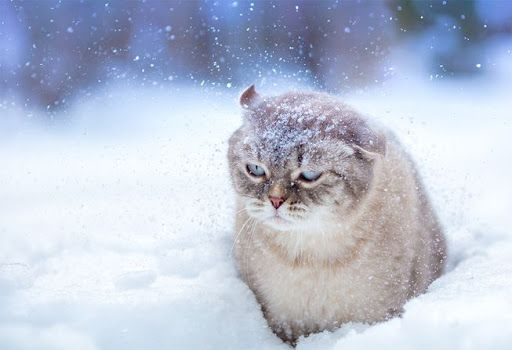 """""""It's too cold and I hate snow!"""""""