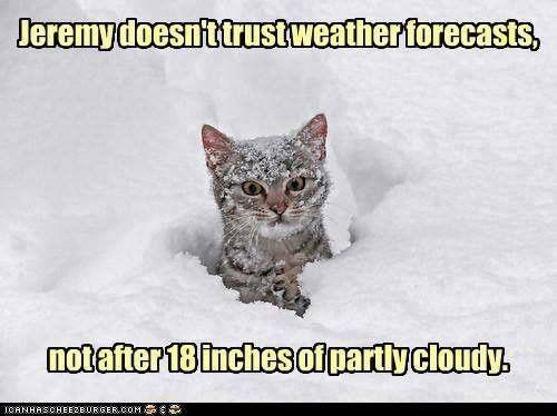 Jeremy the cat in snow.jpg
