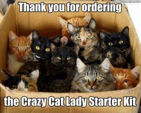 crazy cat lady starter kit.jpg