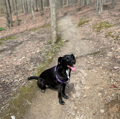 Riley hike.jpg