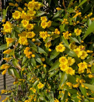 cute yellow flowers.jpg