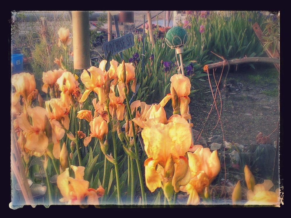Mothers_day_sunrise 066-EFFECTS.jpg