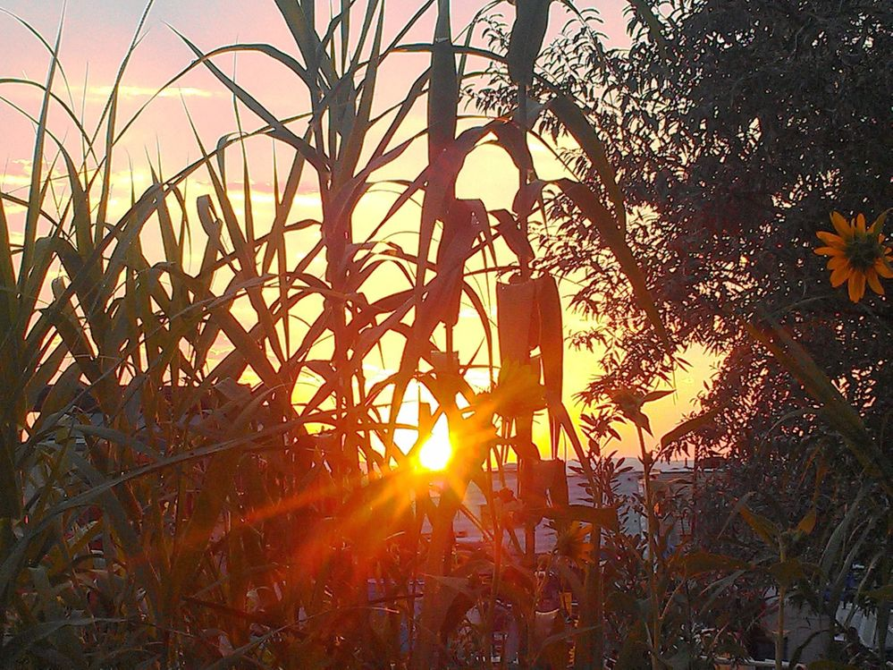 sunrise 105.jpg