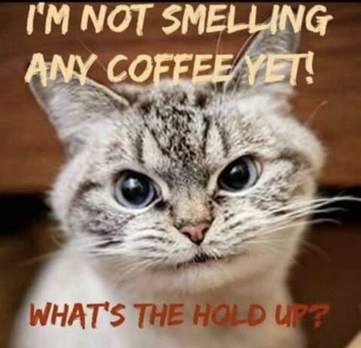 cat mad about no coffee smell.jpg