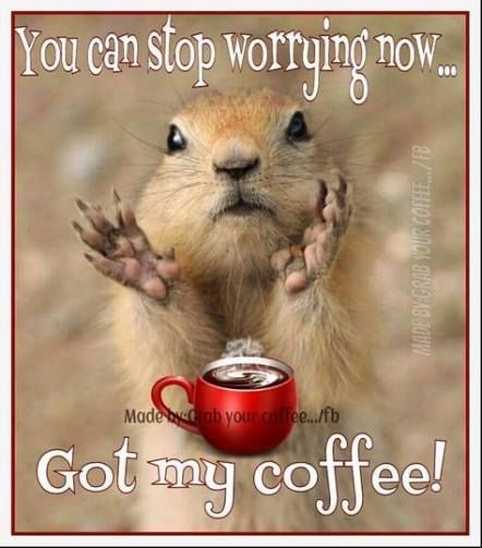 squirrel and coffee.jpg