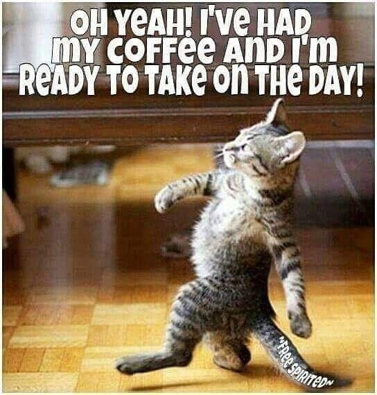 strutting cat.jpg