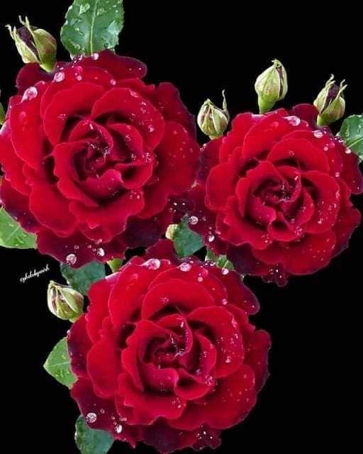 FB_IMG_1625405161528.jpg