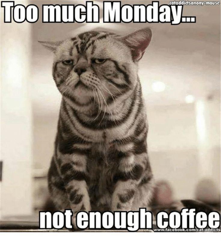 Monday cat.jpg