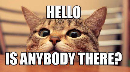 cat anybody there.jpg