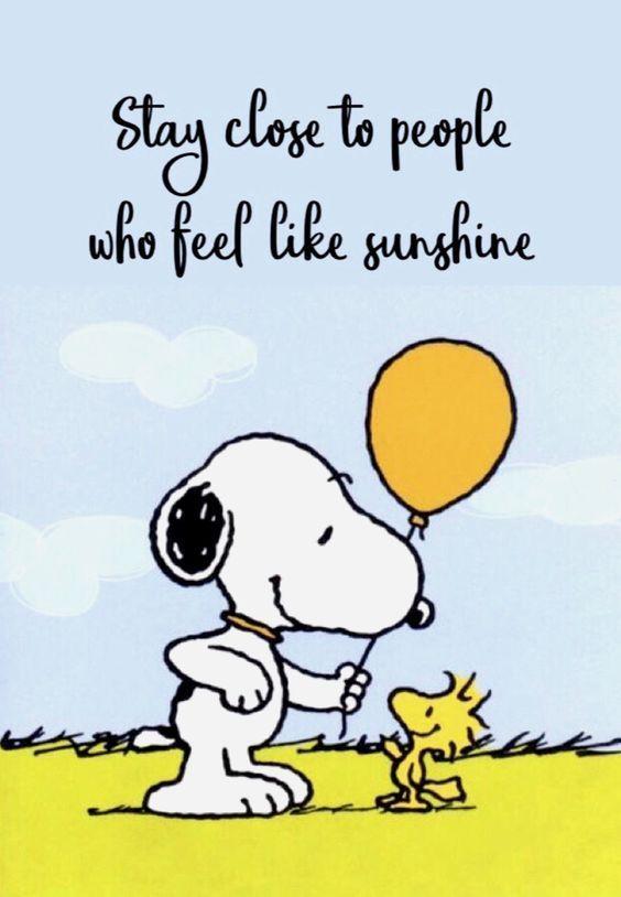 sunshine dog.jpg