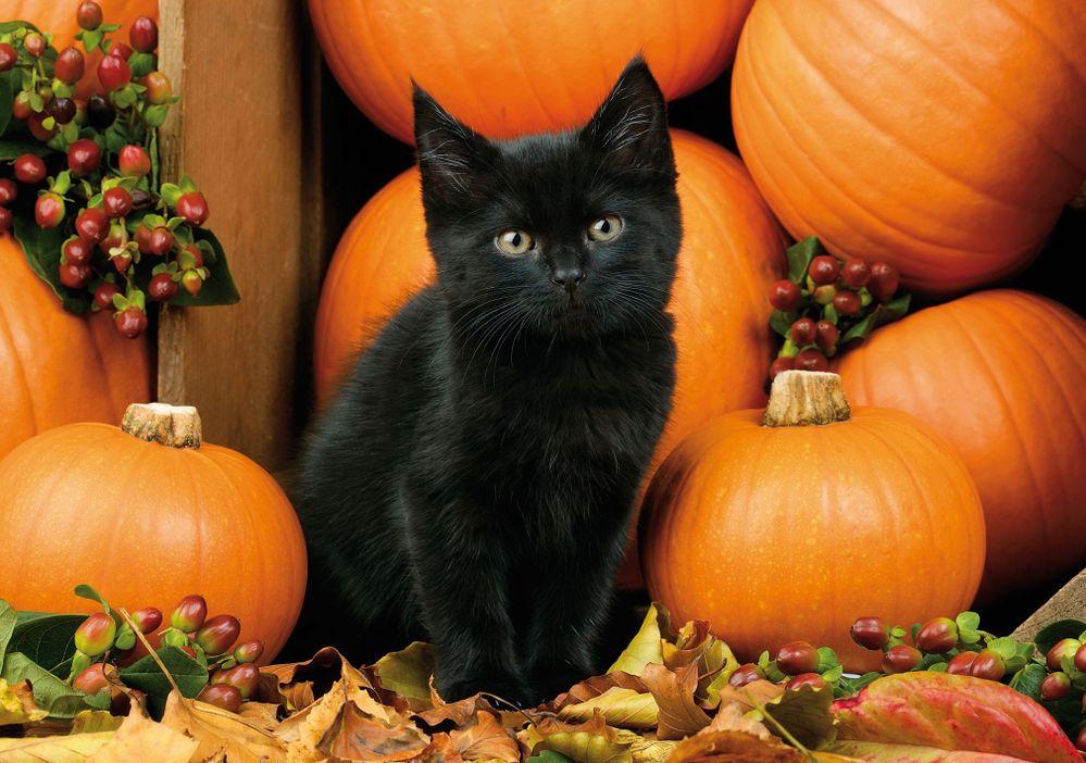 cat and pumpkins.jpg