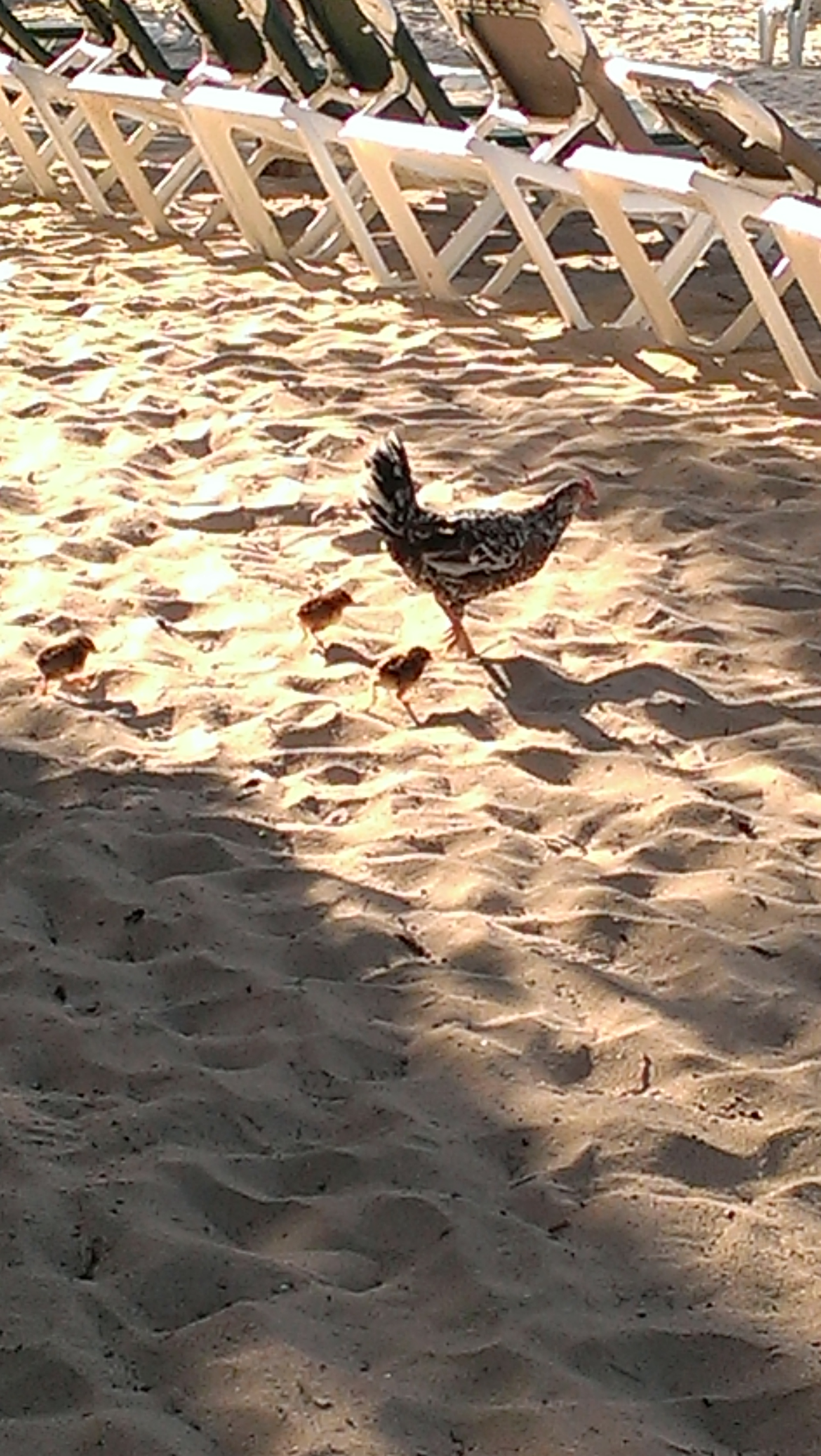 Hot Chicks on the Beach