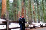TnDSequoia1.JPG