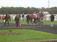 Fabulous race horses