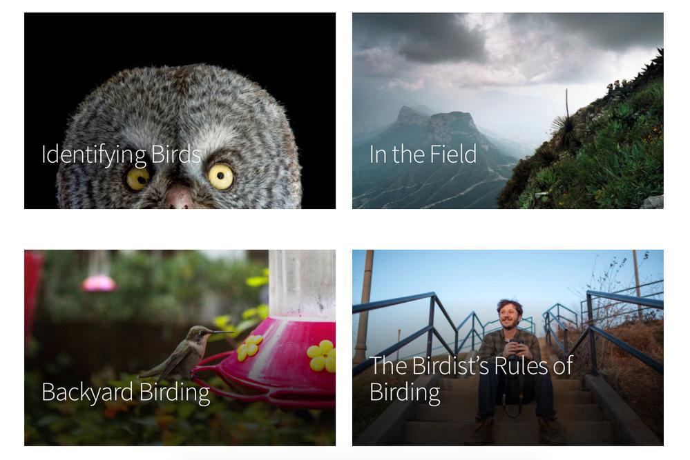 Audubon site screengrab.png