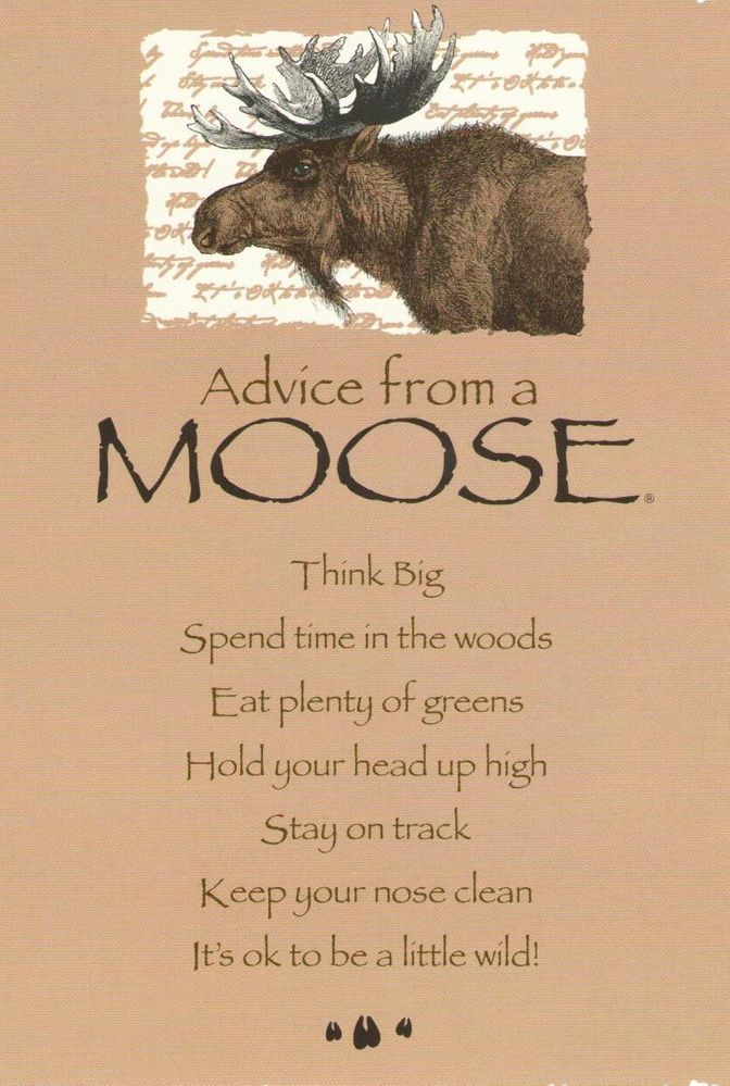 Advice from a Moose - 2.jpg