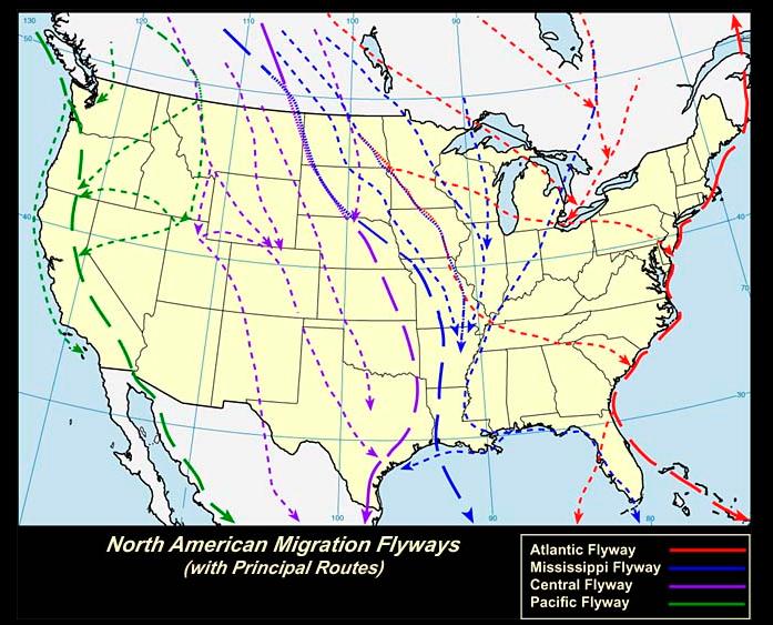 North American Flyways.png