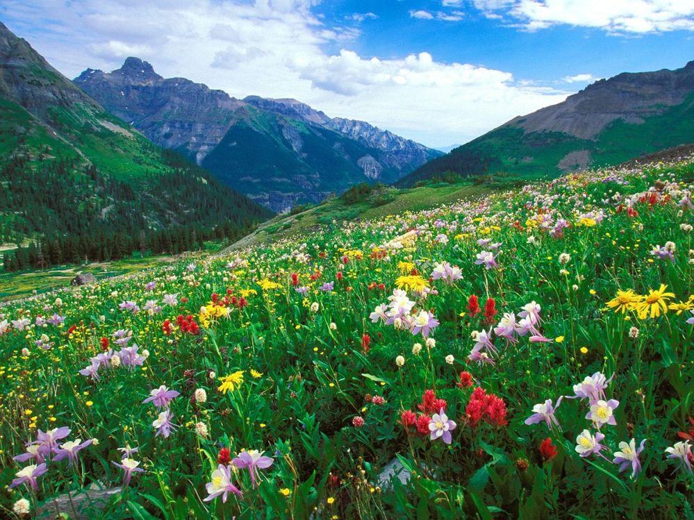 colo wildflowers.jpg