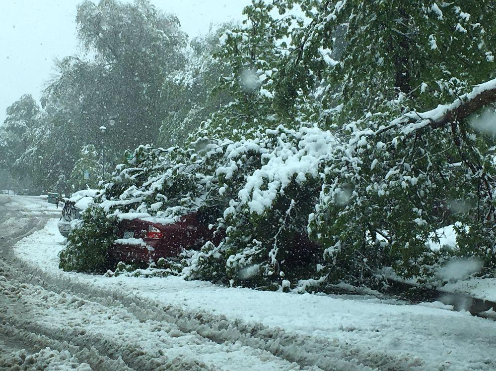 tree hits car.jpg