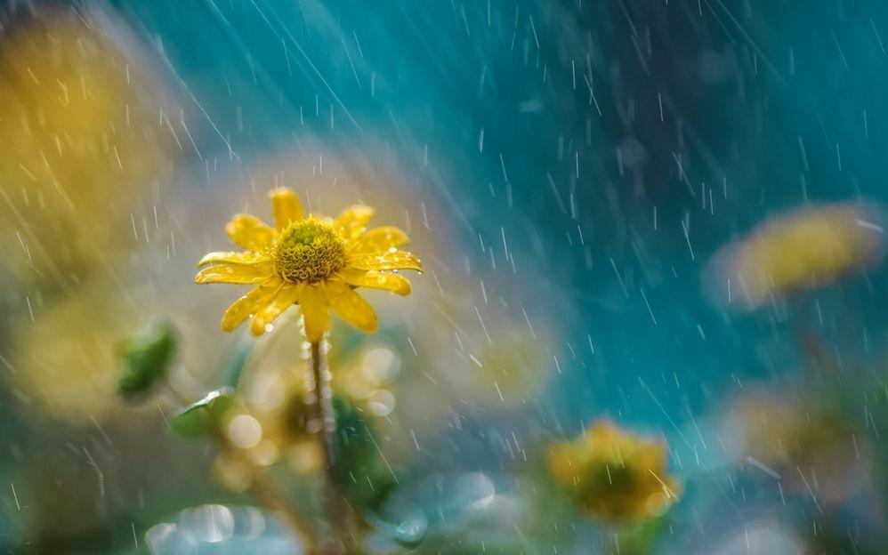 rain on flowers.jpg