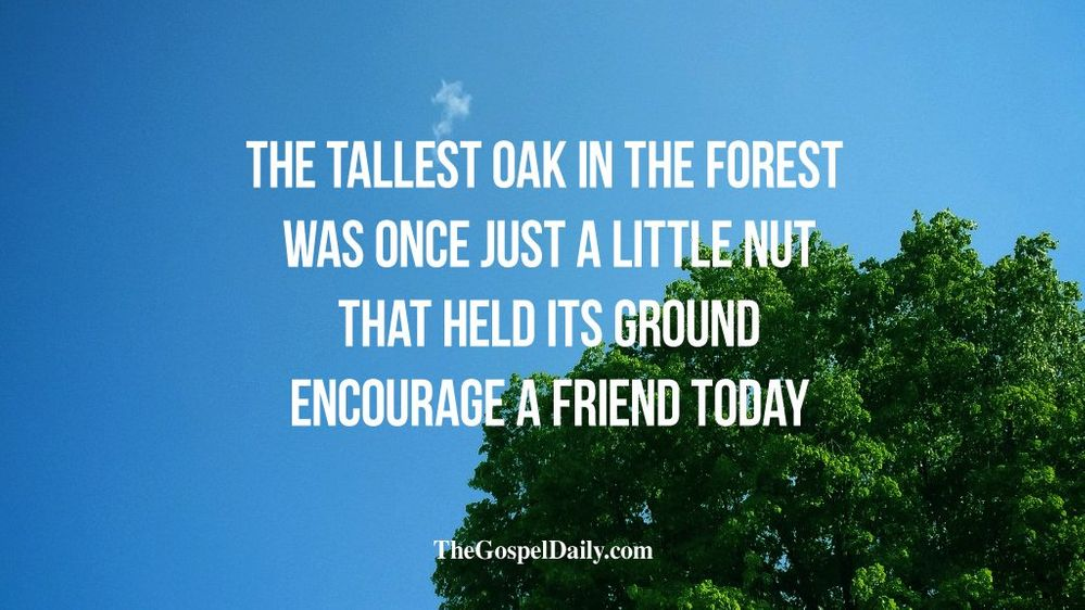 the tallest oak.jpg