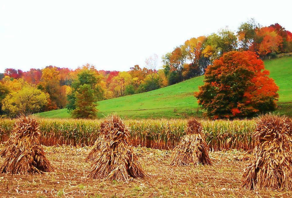 autumn_harvest_straw_colors_corn_trees_fall_hd-wallpaper-gjxG.jpg