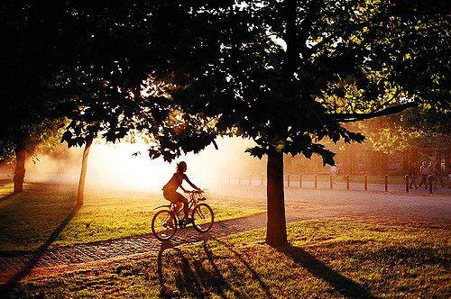 sunshine bikes.jpg