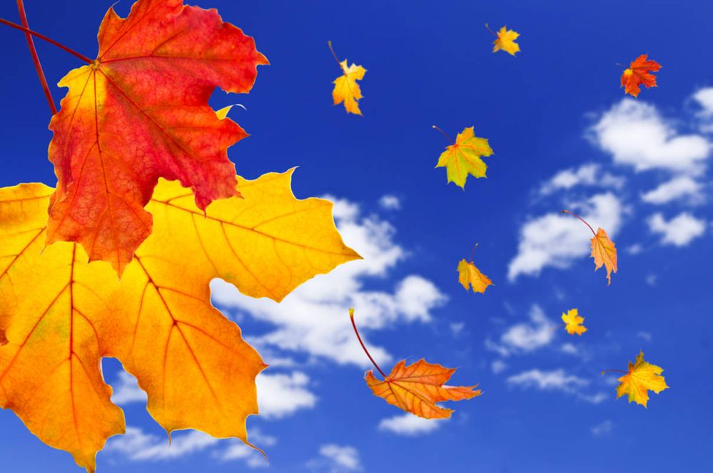 bright sky fall leaves.jpg