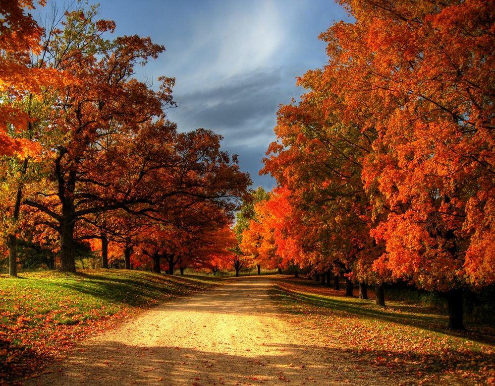 fall road.jpg