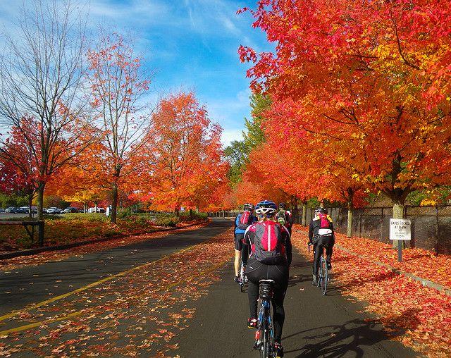 fall rides.jpg