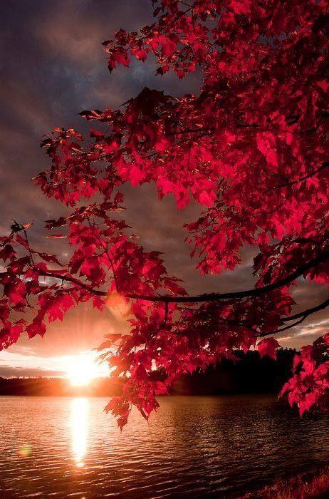 pink sunrise red leaves.jpg