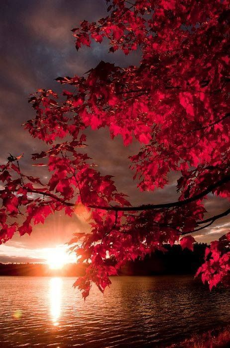 pink sunrise red leaves.jpg