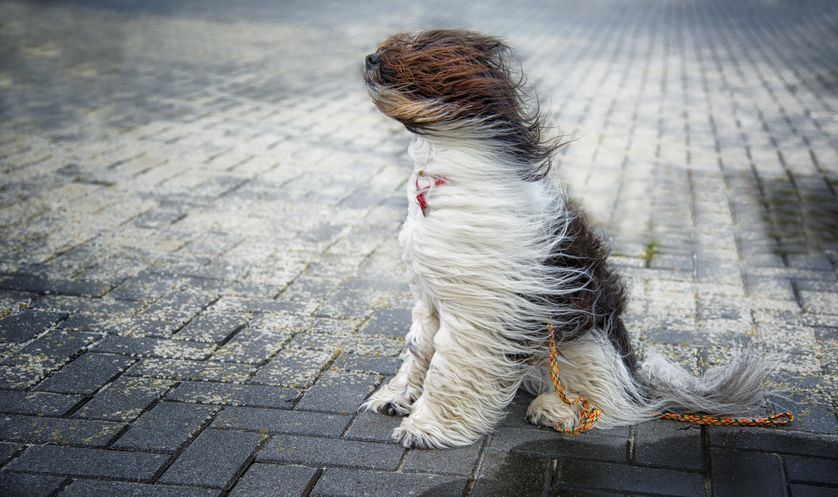 windy dog.jpg