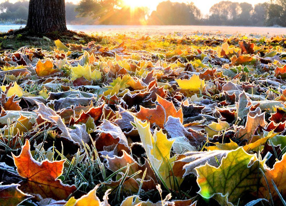 frosty glow.jpg