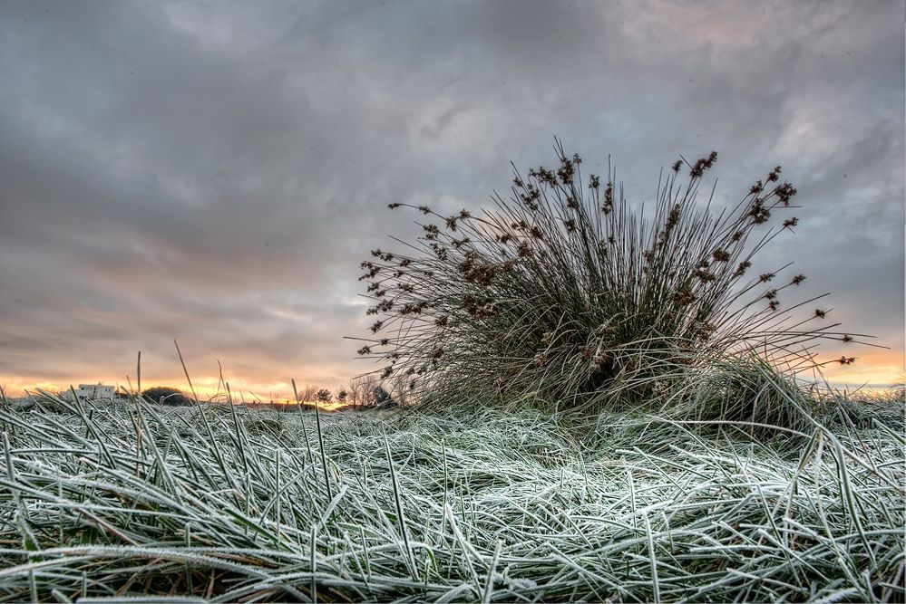frosty sunrise.jpg