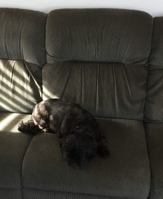 chumley hogging the couch (2).jpg