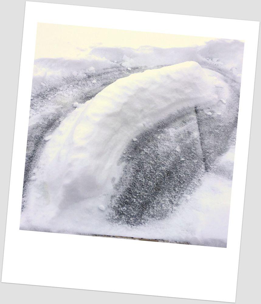 When life gives you a teensy bit o'snow, make a snow slug!
