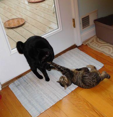 18-02-25 - Kinky & Blackie at Kitchen Door - 1 - Cropped.jpg