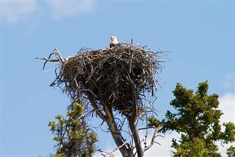 Nicolas Dory's baldie nest pic