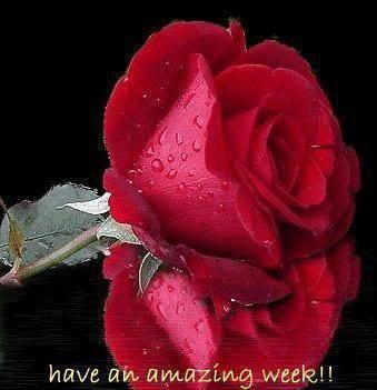 RedRose-Week.jpg