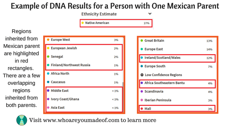 Example-of-DNA-Results-for-a-Person-with-One-Mexican-Parent.png