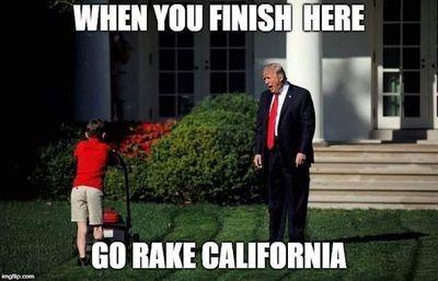 california rake.jpg