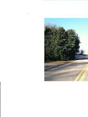 on road.jpg