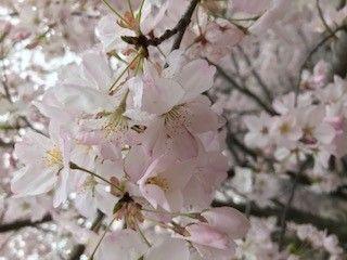 Blossoms2.jpg