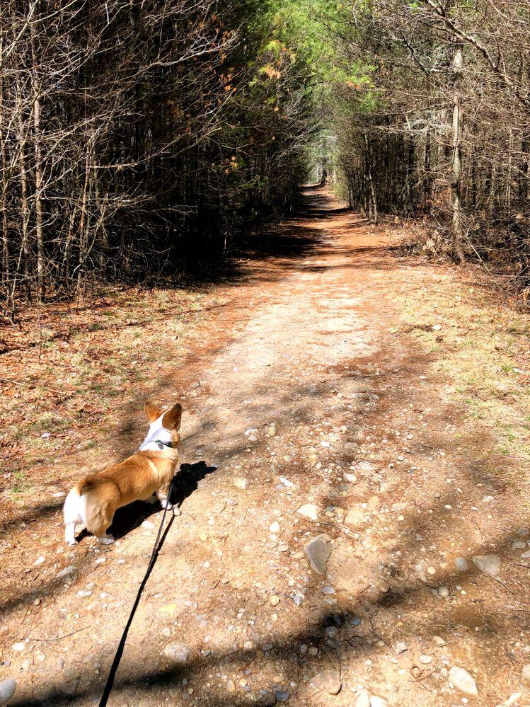 Spring Walk 2.jpg